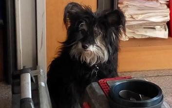 Χάθηκε σκυλίτσα στην Ανθούπολη