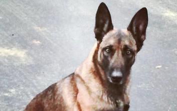Άνθρωπος δάγκωσε σκύλο της αστυνομίας