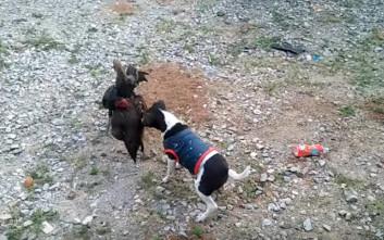 Ο σκύλος διαιτητής