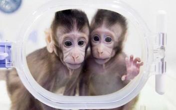 «Πρέπει να υπάρχει ηθική βάση στην κλωνοποίηση»
