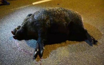 Γνωστός επιχειρηματίας της Φθιώτιδας σκοτώθηκε σε τροχαίο με αγριογούρουνο