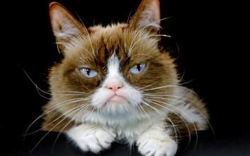 Αποζημίωση 710.000 δολαρίων για τη «γκρινιάρα γάτα»