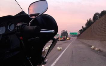 Οι κότες «το έσκασαν» και προκάλεσαν αλαλούμ σε αυτοκινητόδρομο
