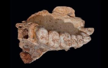 Μια γνάθος... αλλάζει την ιστορία του Homo Sapiens