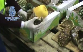 Βρήκαν 745 κιλά κοκαΐνης μέσα σε ανανάδες
