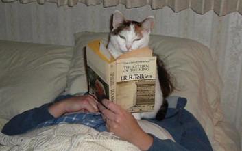 Γάτες που δεν ξέρουν τι θα πει προσωπικός χώρος