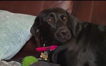 Το γαύγισμα του σκύλου έσωσε την οικογένεια από φριχτό θάνατο