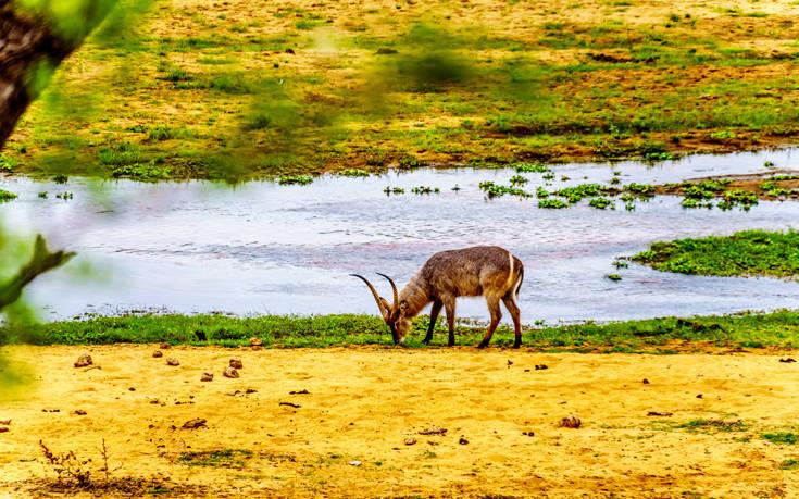 Εθνικό Πάρκο Κρούγκερ Νότια Αφρική