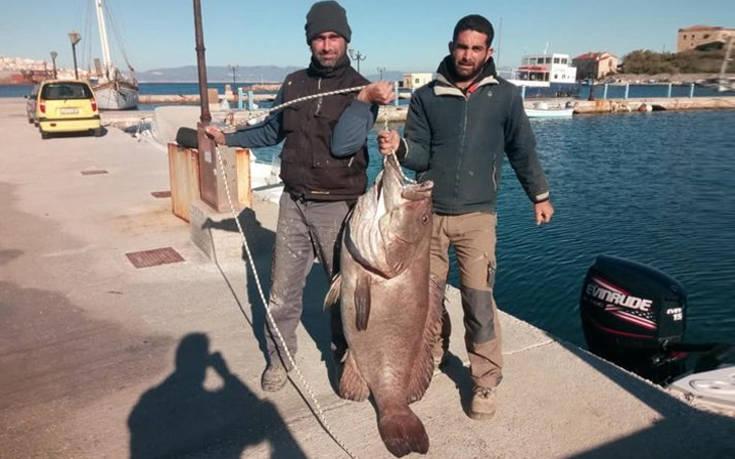 Ψάρεψαν στη Σύρο σφυρίδα 63 κιλών