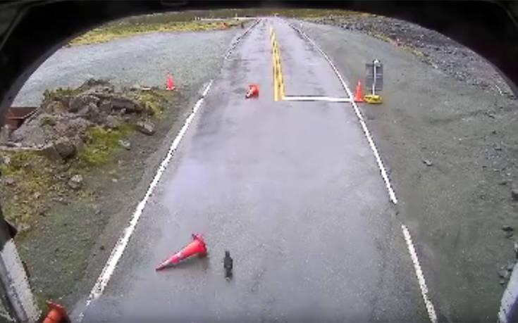 Οι παπαγάλοι της Νέας Ζηλανδίας προκαλούν αναταραχή στους... δρόμους