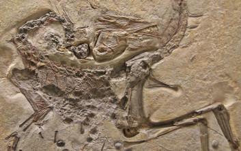 Προϊστορικό σνακ δεινόσαυρου χαρακτηρίζεται τεράστια ανακάλυψη για την παλαιοντολογία!