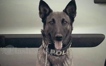 Μίσα, ο σκύλος που έκανε την ανακάλυψη ναρκωτικών αξίας 70 εκατ. ευρώ
