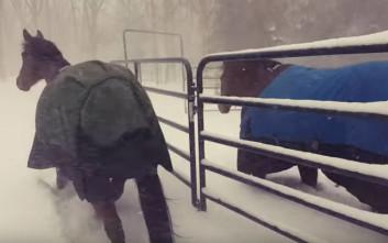 Άλογα κάνουν αναστροφή μόλις βγαίνουν στο χιόνι