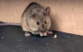 Ποντίκια έκαναν... επίσκεψη σε κτίριο του ΑΠΘ