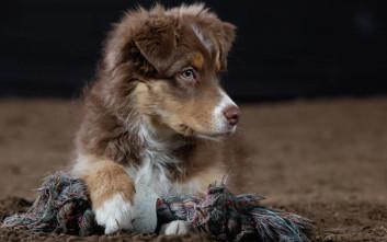 Προσφέρθηκε αμοιβή-«μαμούθ» για εξαφανισμένο σκύλο