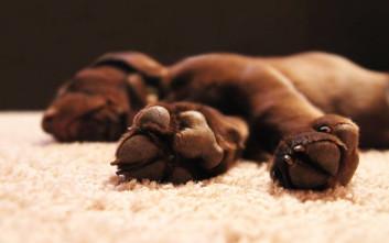 Μυστηριώδης ασθένεια σκοτώνει τους σκύλους στη Νορβηγία