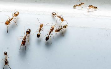 Τα βασικά βήματα για να μην πλησιάζουν τα μυρμήγκια στην κουζίνα
