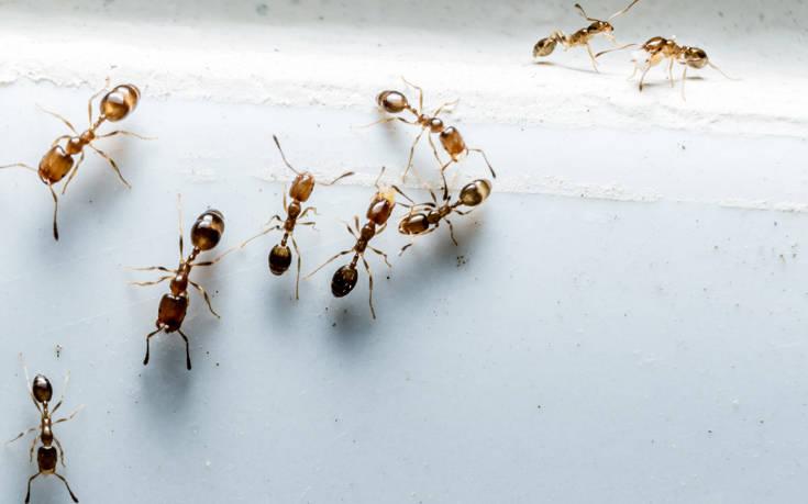 Αυτά δεν κάνουν σωστά όσοι έχουν μυρμήγκια στην κουζίνα