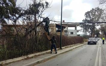 Κλαδί έπεσε σε καλώδια της ΔΕΗ στην Κρήτη