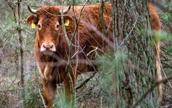 Κρούσματα καταρροϊκού πυρετού σε κτηνοτροφική μονάδα της Λέσβου