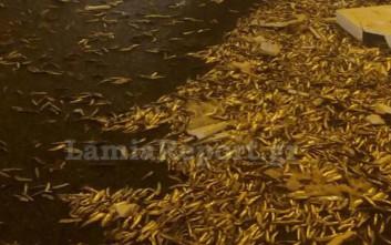 «Πλημμύρισε» από ψάρια η σήραγγα της Στυλίδας μετά από τροχαίο