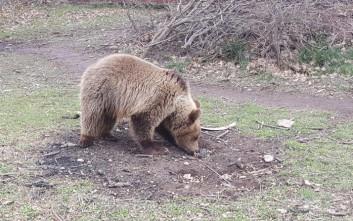 Αρκουδάκι βγήκε προς… πώληση στο διαδίκτυο έναντι 1.100 ευρώ