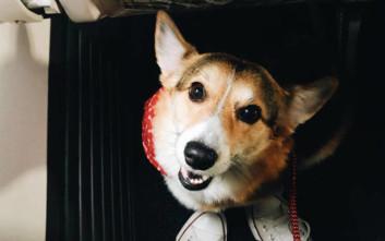 Σκυλίτσα παρηγορεί άντρα που έχασε το κατοικίδιό του