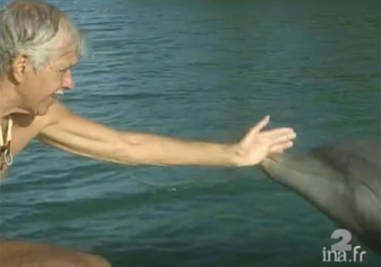 delfinia1
