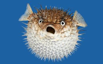 Παράξενα και ενδιαφέροντα δεδομένα για τα ψάρια