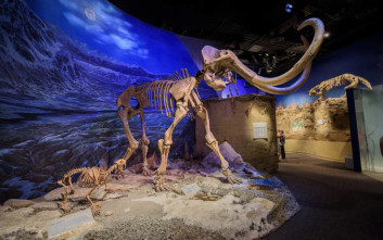 Οι υπέροχες ιστορίες που διηγούνται τα… απολιθωμένα αποτυπώματα των μαμούθ