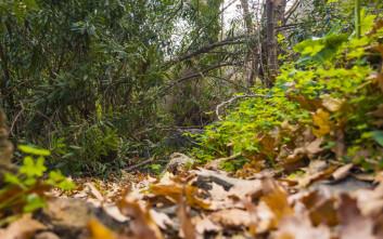 Ηλικιωμένος τουρίστας προσπάθησε να διασχίσει φαράγγι και σκοτώθηκε