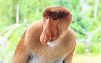 σεξ με μαϊμού βίντεο τριχωτό squirt βίντεο