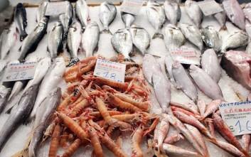 Δεσμεύτηκαν ψάρια 384 κιλών στο λιμάνι του Πειραιά