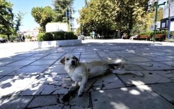 Σκότωσαν αδέσποτο σκύλο με φόλα στη Λαμία