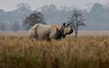 Όλο σχεδόν το συμβούλιο προστασίας άγριας ζωής του Τραμπ αποτελείται από… κυνηγούς μεγάλων ζώων!