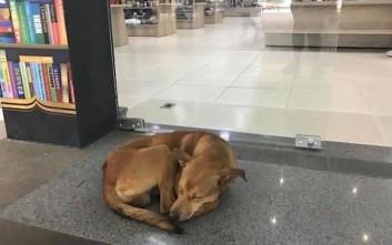 Η κλοπή ενός βιβλίου από… αδέσποτο σκύλο και η λεπτομέρεια που συγκινεί