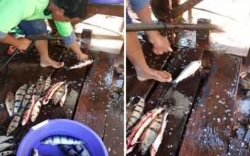 Σίγουρα δεν έχετε καθαρίσει ψάρια με αυτό τον τρόπο