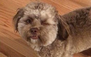 Ο σκύλος που κάποιοι λένε πως έχει… ανθρώπινο πρόσωπο