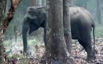 O… θεριακλής ελέφαντας που καπνίζει στο δάσος πονοκεφαλιάζει τους επιστήμονες