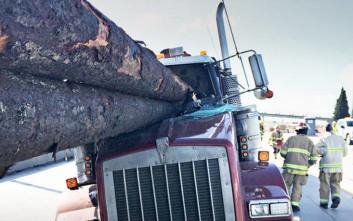 Τεράστιοι κορμοί διαπέρασαν το παρμπρίζ και ο οδηγός βγήκε… ανέγγιχτος