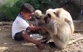 Ο δίχρονος «Μόγλης» και η παρέα του με τις μαϊμούδες