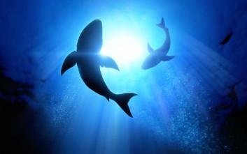Τόσους καρχαρίες σκοτώνει ο άνθρωπος τον χρόνο