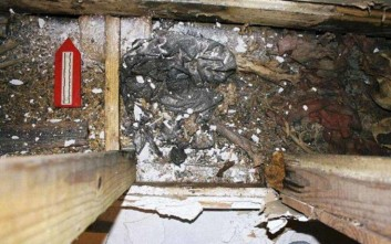 Εγκλωβίστηκε μέσα σε τοίχο και ταυτοποιήθηκε τρία χρόνια μετά