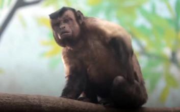 Μαϊμού με «ανθρώπινο πρόσωπο» έχει τρελάνει το διαδίκτυο