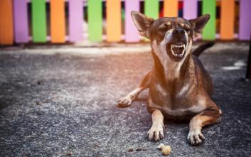 Επίθεση σκύλων σε 9χρονο: Παρά τις παρατηρήσεις των γονιών, ο ιδιοκτήτης τα άφηνε ελεύθερα