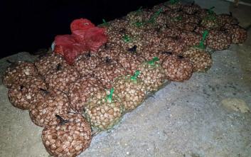 Κατασχέθηκαν 782 κιλά ακατάλληλων οστράκων