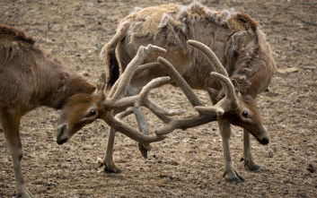 Μια κιβωτός τραυματισμένων ζώων στο Καλοχώρι