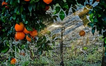 Deutsche Welle: Τα πορτοκάλια της μαφίας