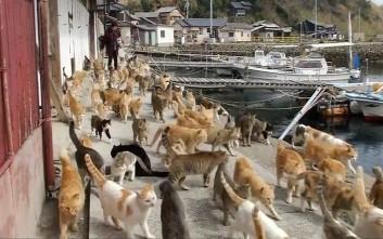 Η «πόλη των γατών» υπάρχει και βρίσκεται στην Ιαπωνία