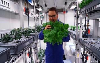 Λαχανικά από την Ανταρκτική